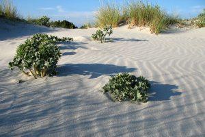 Spiaggia Capo Comino - Siniscola - Sardegna