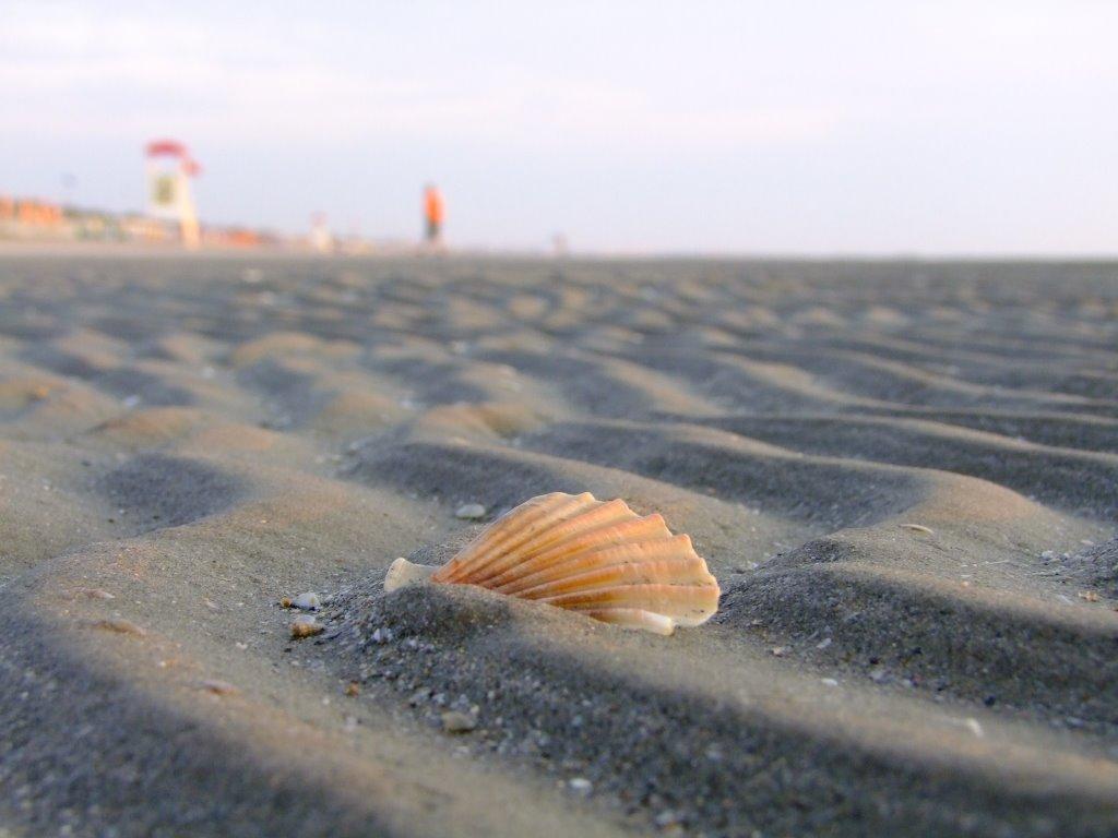 Beach of Zadina Pineta