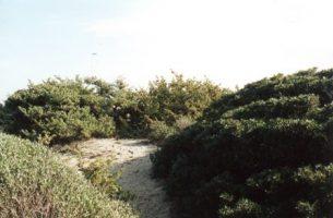 Spiaggia Specchiarica