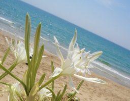 Spiaggia Lido Fiori - Menfi