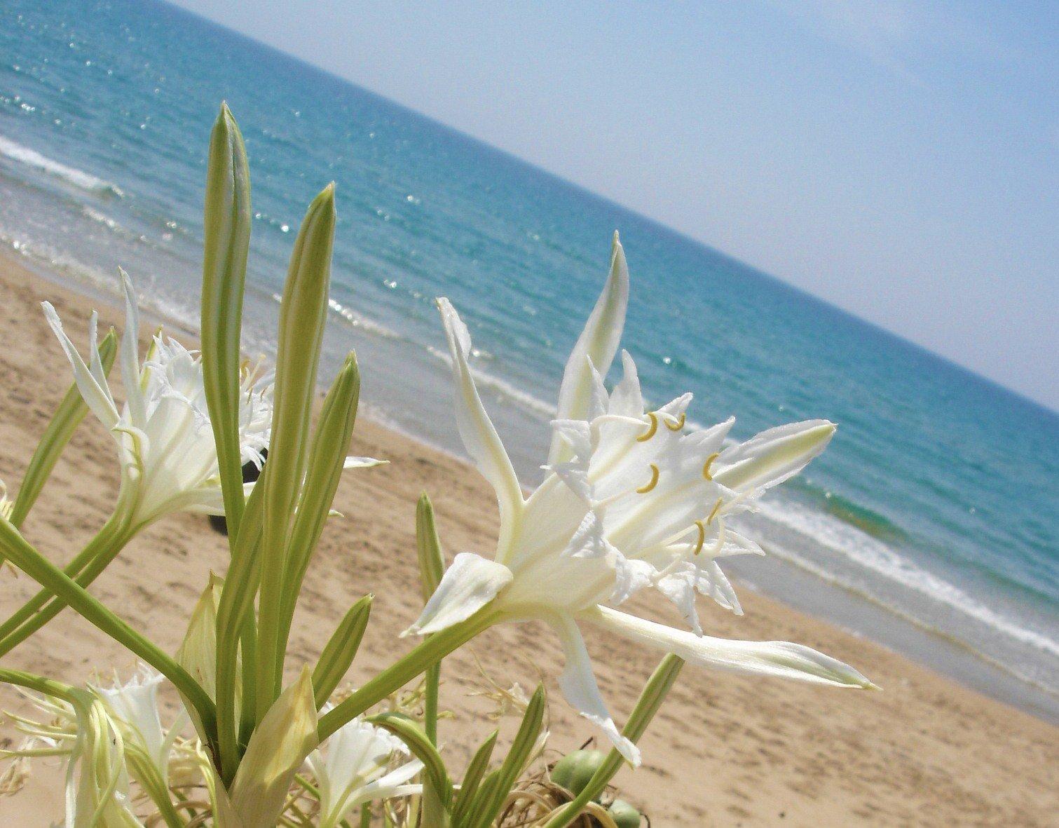 Lido Fiori Beach