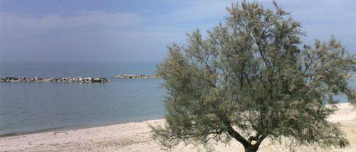Falconara Marittima - Spiaggia