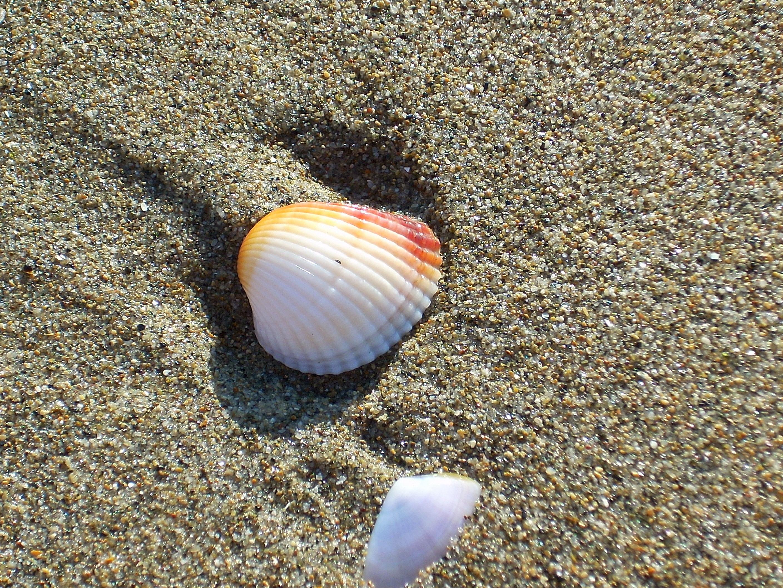 Spiaggia di Lido di Castel Fusano