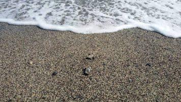 Spiaggia Guardavalle Marina - Calabria - Tartarughe Caretta Caretta