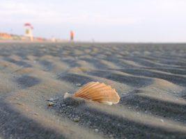 Spiaggia Zadina Pineta - Romagna