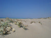 Spiagge Falconara