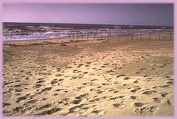 Spiaggia di Rimigliano
