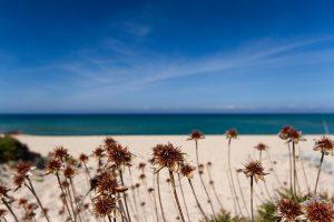Li Mindi Spiaggia Badesi