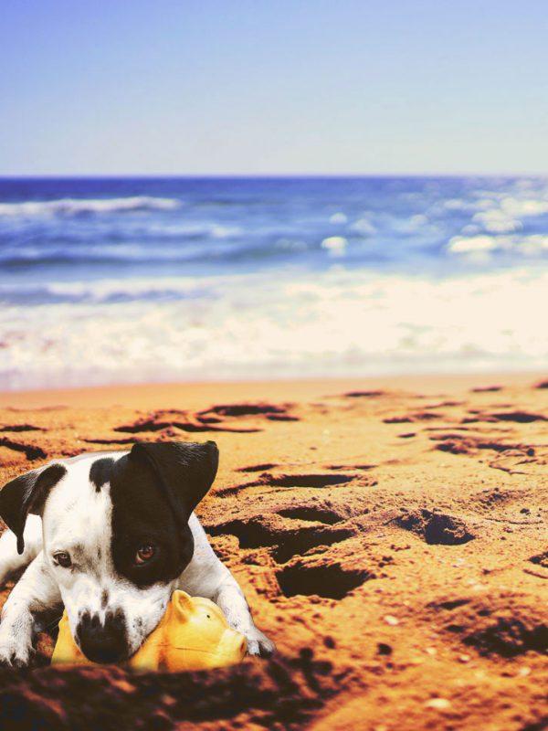 Novità 2018: Spiagge accessibili cani