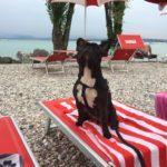 Stabilimento accessibile cani