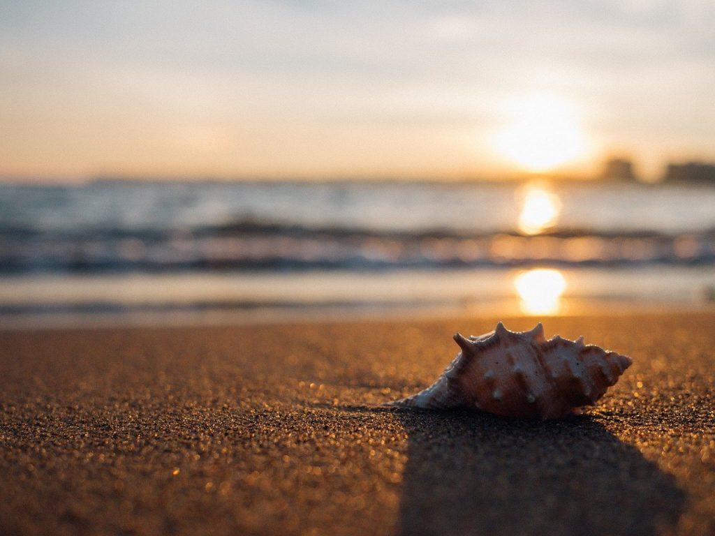Raccogliere conchiglie al mare con i bambini