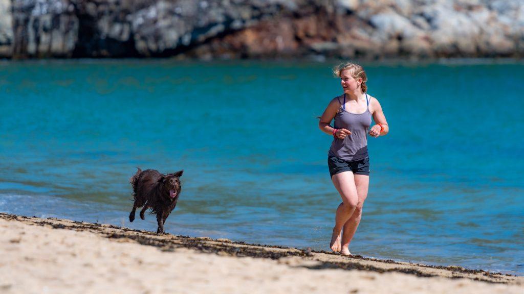 Attività da fare in spiaggia con gli animali