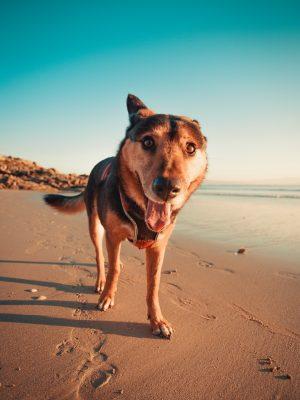 Cani in spiaggia: come gestirli al meglio?