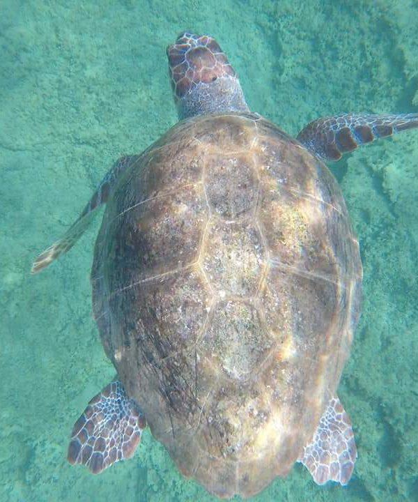 Record di nascite per le tartarughe Caretta Caretta